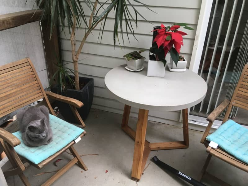 Housesitting assignment in Charlestown, New South Wales, Australia