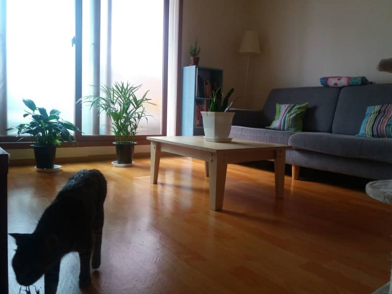 Housesitting assignment in Seoul, South Korea