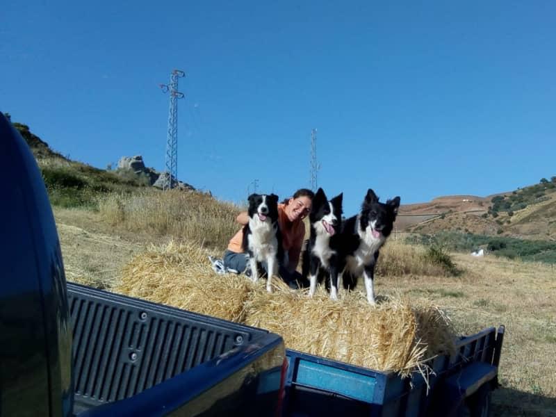 Housesitting assignment in Alcaucín, Spain