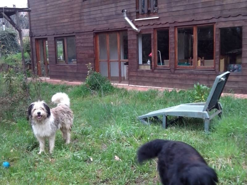 Housesitting assignment in Zagarolo, Italy