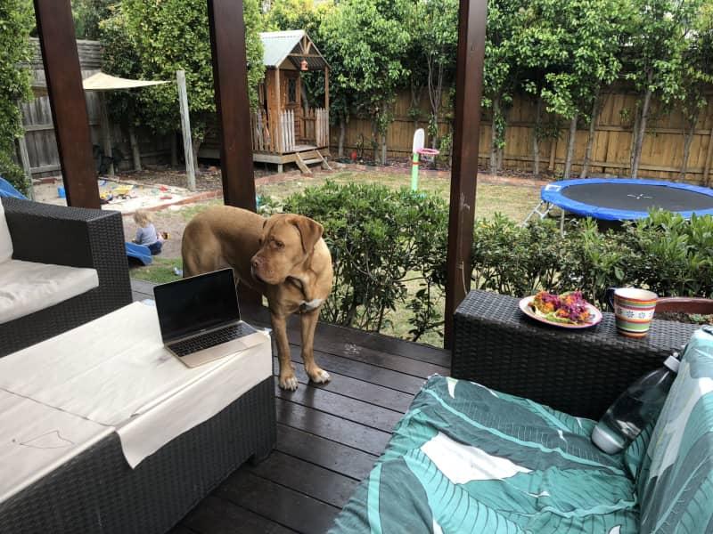 Housesitting assignment in Bentleigh, Victoria, Australia