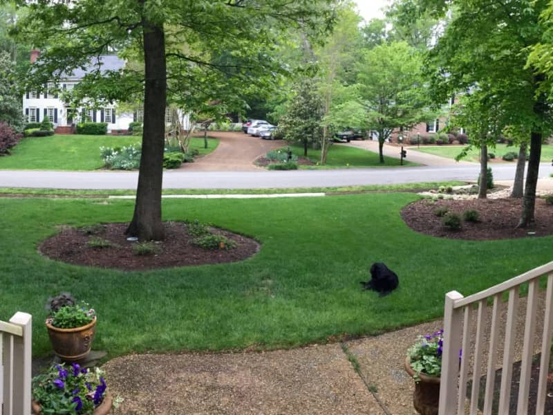 Housesitting assignment in Williamsburg, Virginia, United States