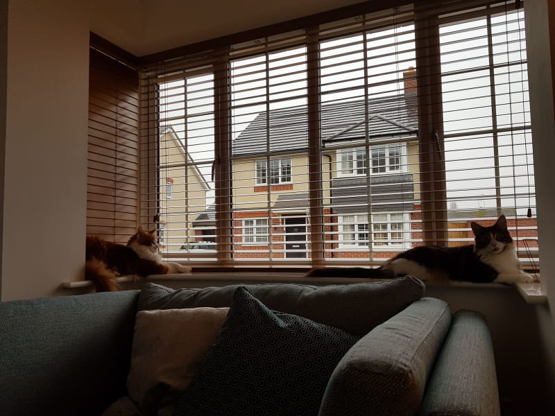 Housesitting assignment in Evesham, United Kingdom