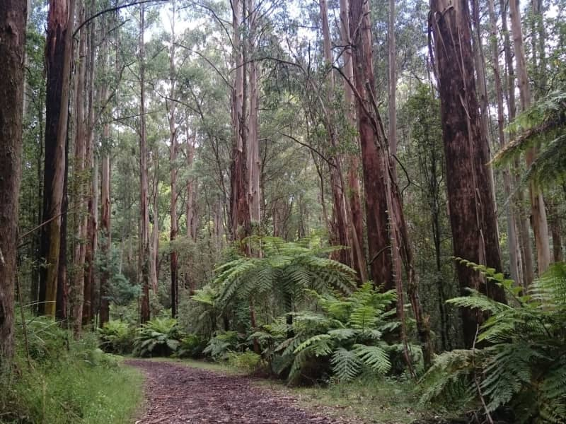 Housesitting assignment in Upwey, Victoria, Australia