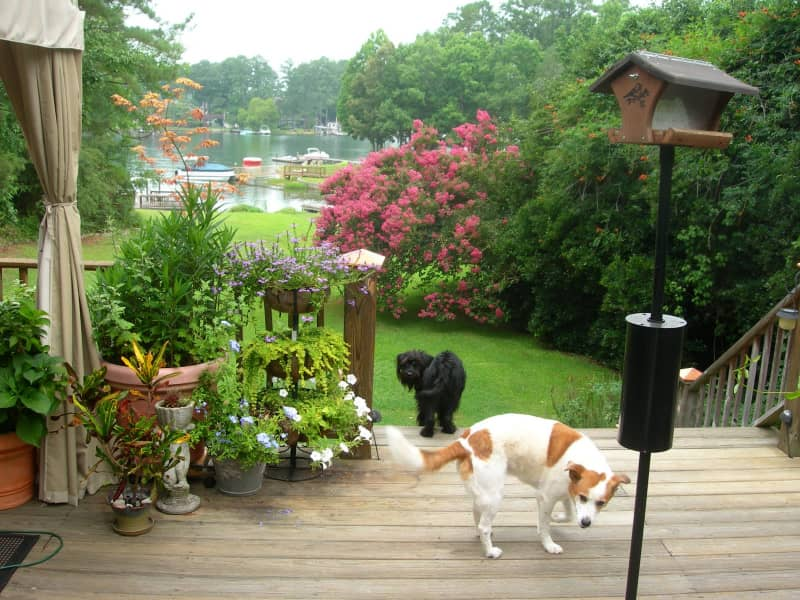 Housesitting assignment in Lexington, South Carolina, United States