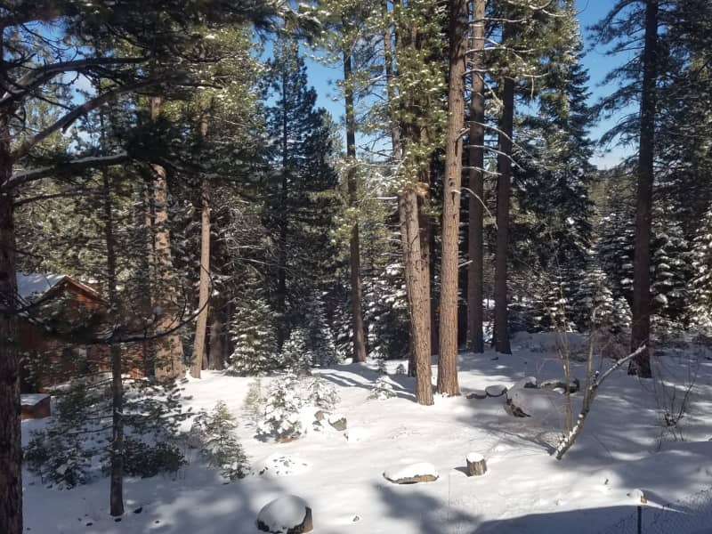 Housesitting assignment in Truckee, California, United States