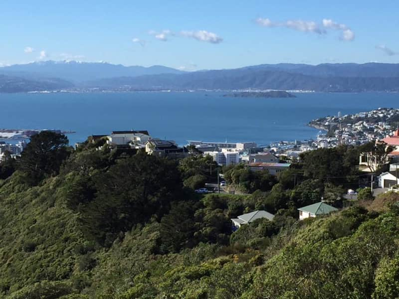Housesitting assignment in Wellington, New Zealand
