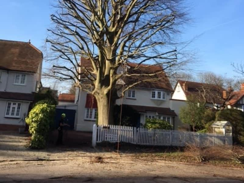 Housesitting assignment in Thames Ditton, United Kingdom