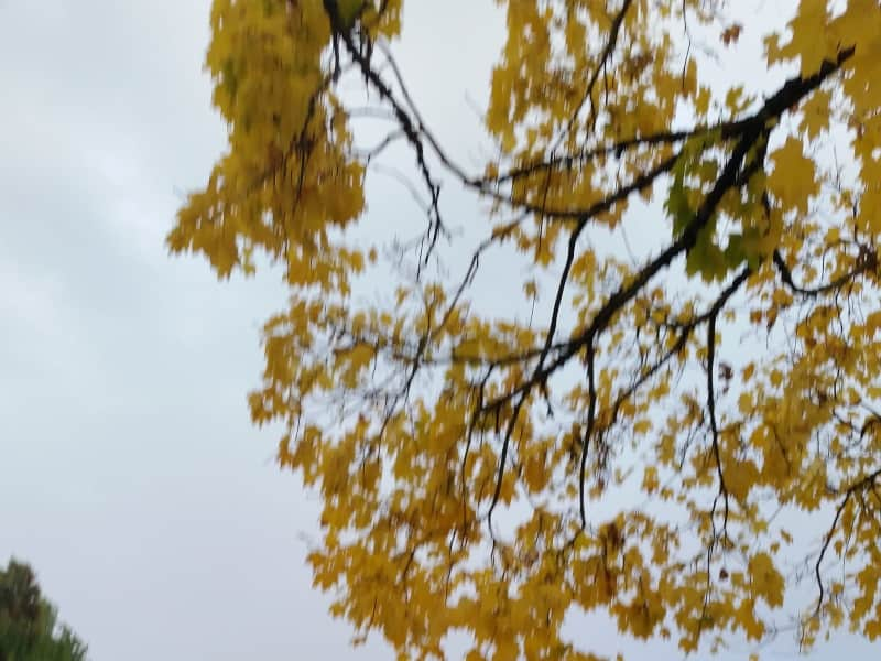 Housesitting assignment in North Portland, Oregon, United States