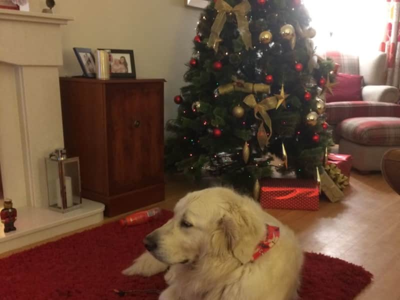Housesitting assignment in Bridgend, United Kingdom