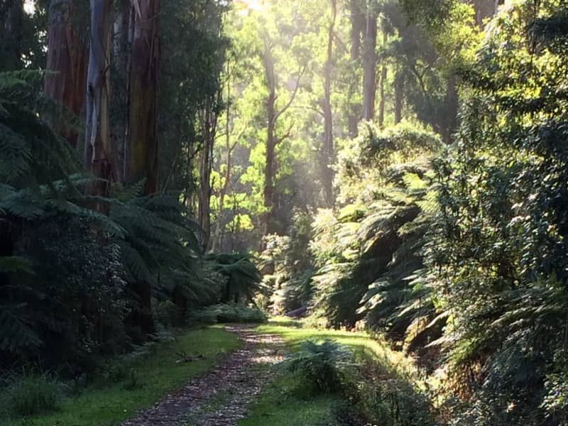 Housesitting assignment in Warburton, Victoria, Australia