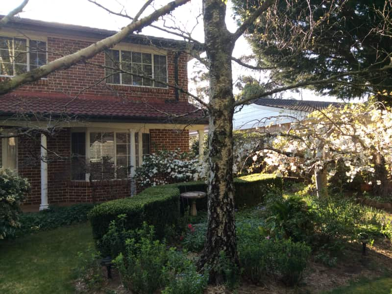 Housesitting assignment in Wentworth Falls, New South Wales, Australia