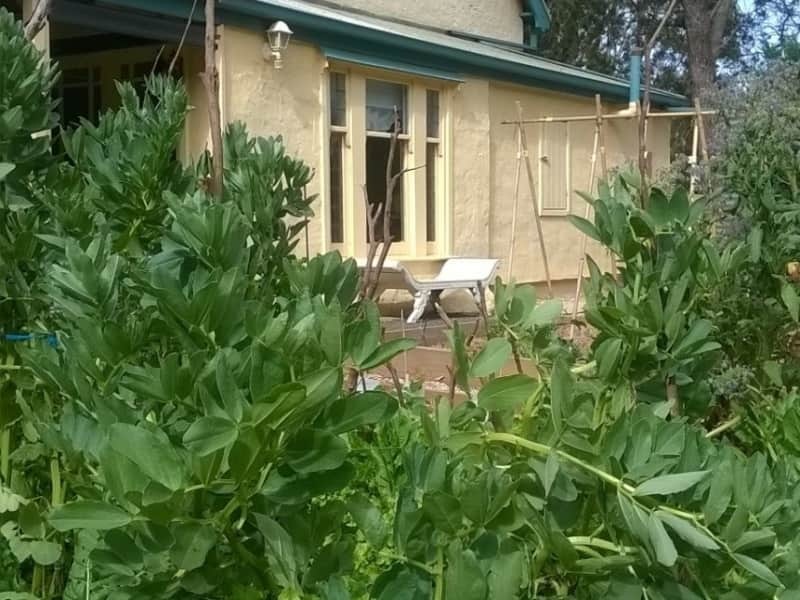 Housesitting assignment in Wistow, South Australia, Australia