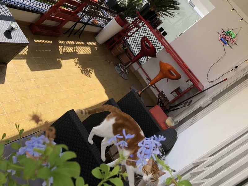 Housesitting assignment in Sitges, Spain