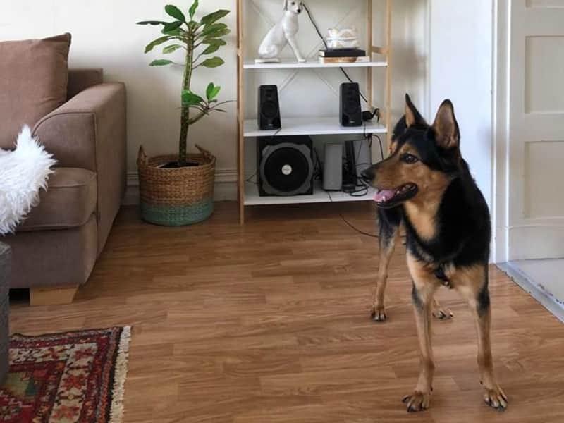 Housesitting assignment in Karlskrona, Sweden