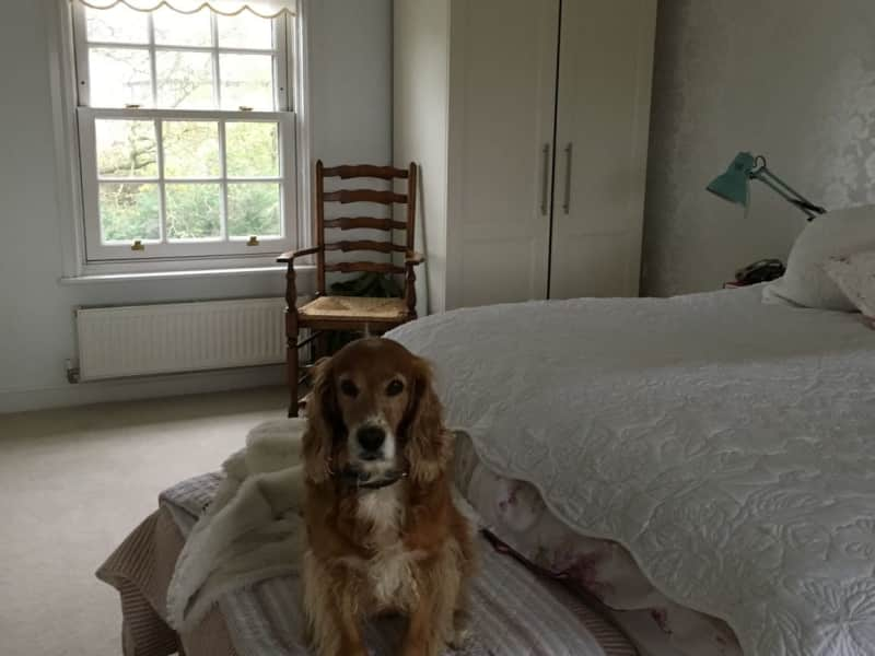 Housesitting assignment in Dorchester, United Kingdom