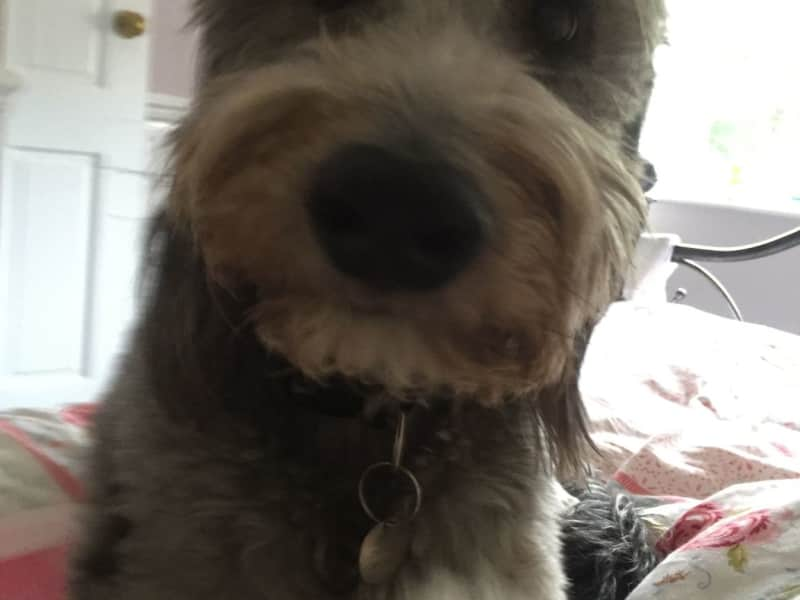 Housesitting assignment in Thixendale, United Kingdom