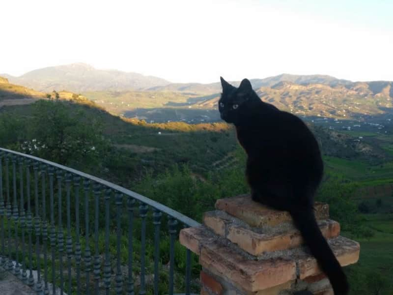 Housesitting assignment in Pizarra, Spain