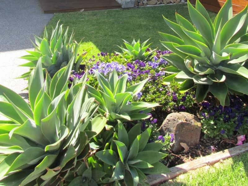 Housesitting assignment in Essendon West, Victoria, Australia