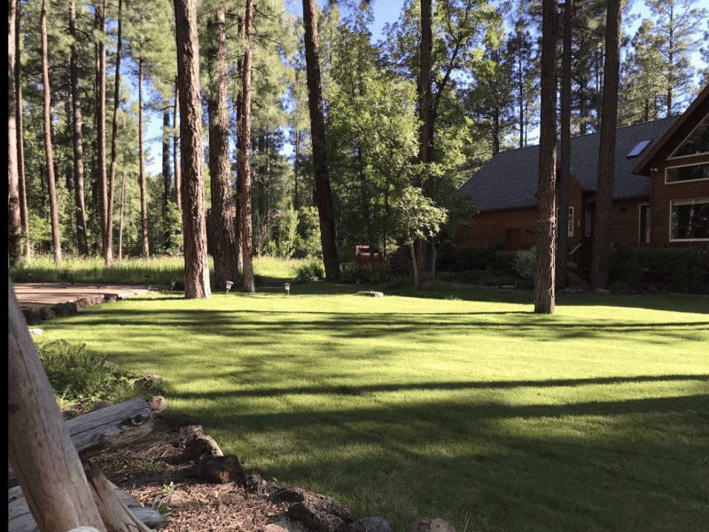 Housesitting assignment in Show Low, Arizona, United States