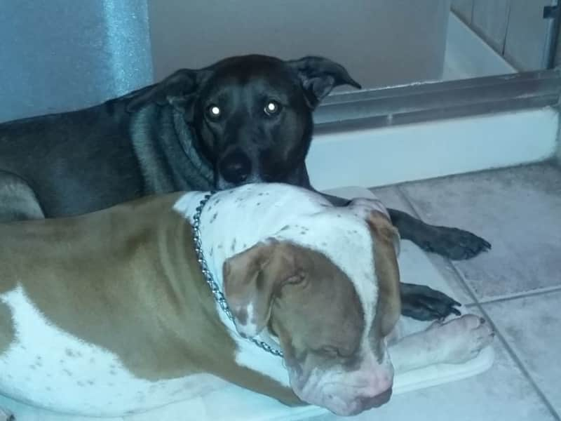 Housesitting assignment in Rio Rancho, New Mexico, United States