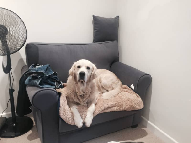 Housesitting assignment in Dorridge, United Kingdom