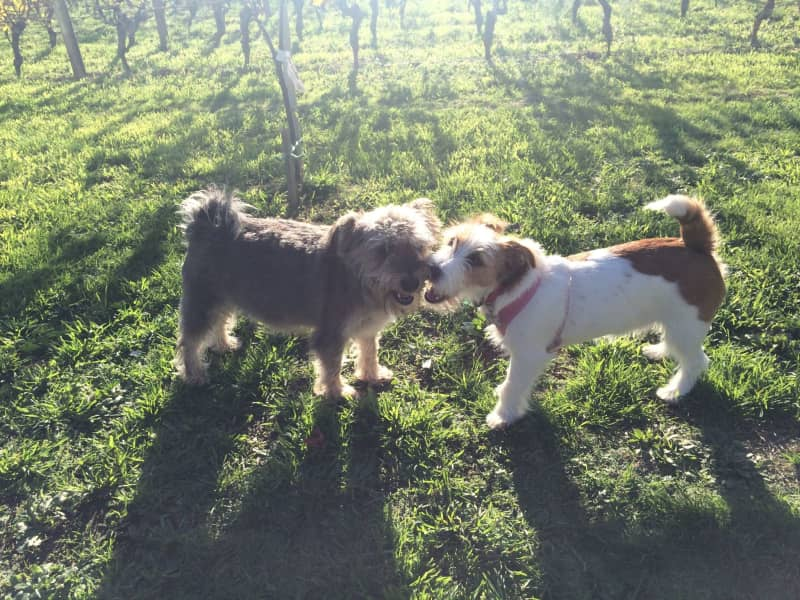 Housesitting assignment in Martinborough, New Zealand