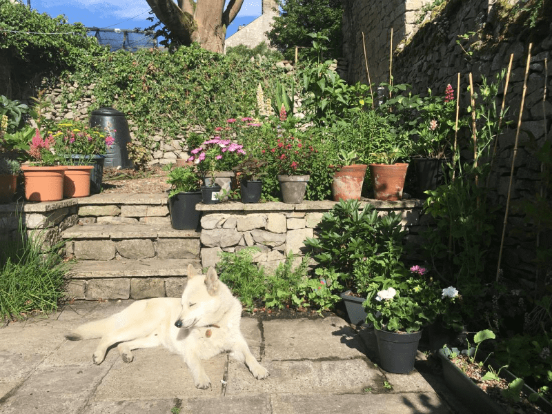 Housesitting assignment in Tideswell, United Kingdom