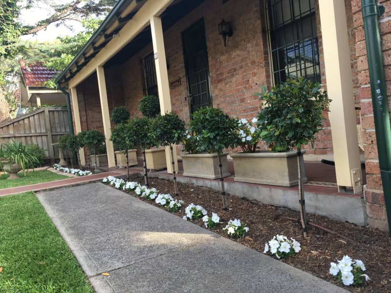 Housesitting assignment in Ashfield, New South Wales, Australia