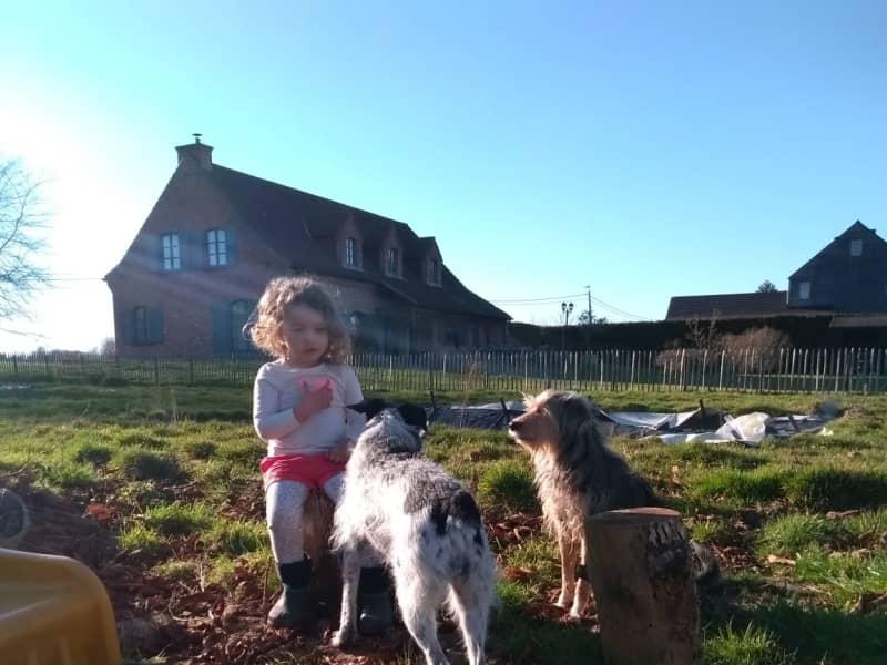 Housesitting assignment in Ronse, Belgium