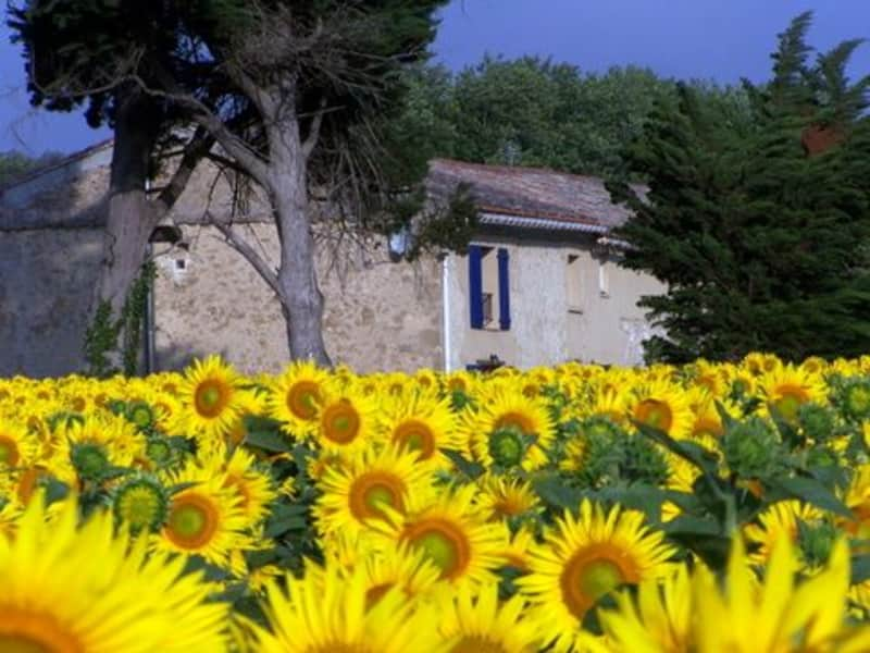 Housesitting assignment in Montferrand, France