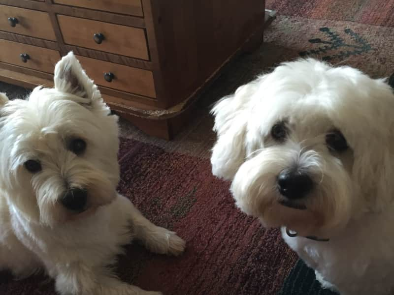 Housesitting assignment in Bungay, United Kingdom