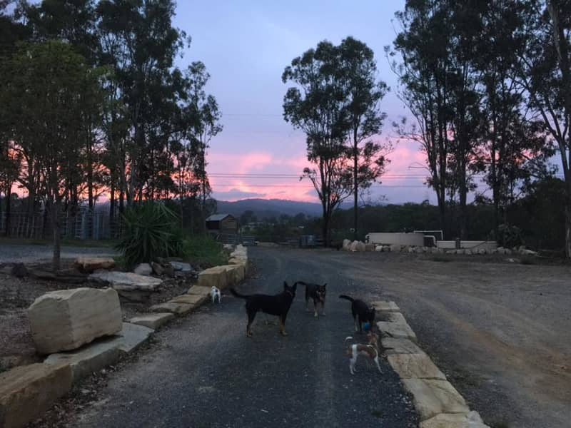 Housesitting assignment in Moorina, Queensland, Australia