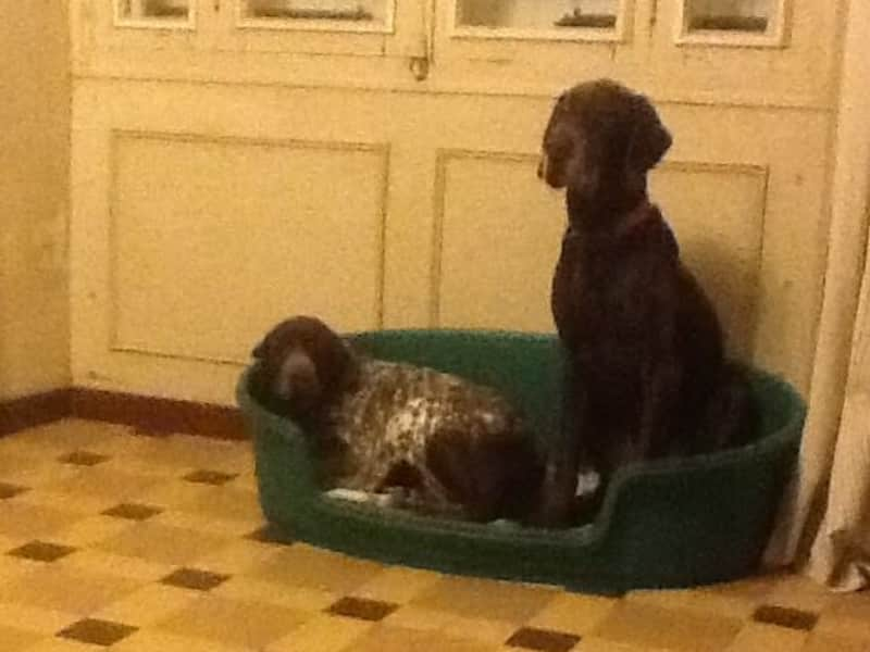 Housesitting assignment in Saumur, France