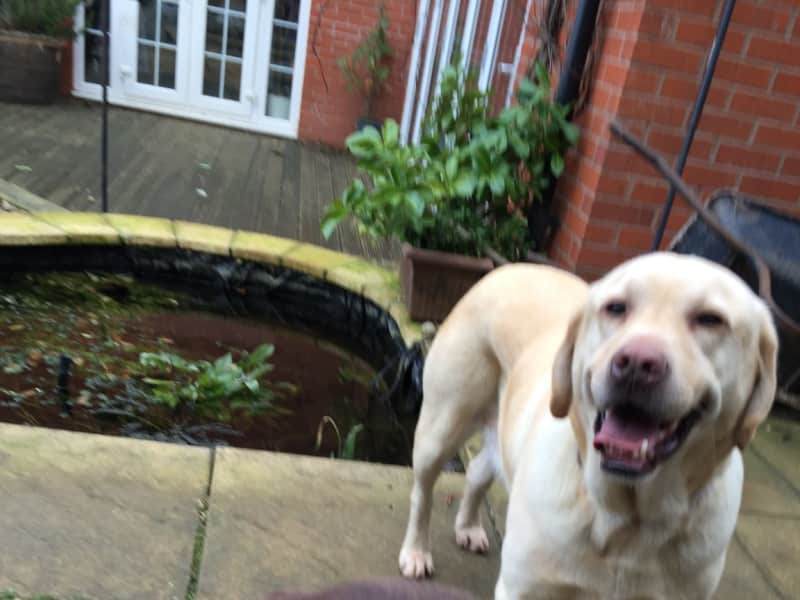 Housesitting assignment in Clipstone, United Kingdom