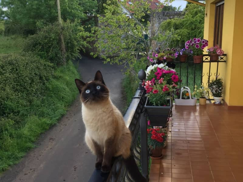 Housesitting assignment in Oviedo, Spain