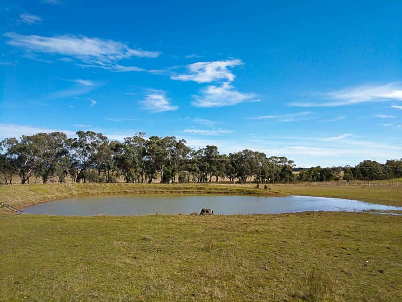 Housesitting assignment in Lancefield, Victoria, Australia