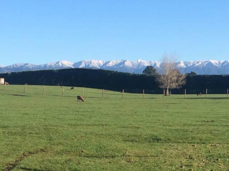 Housesitting assignment in Norsewood, New Zealand