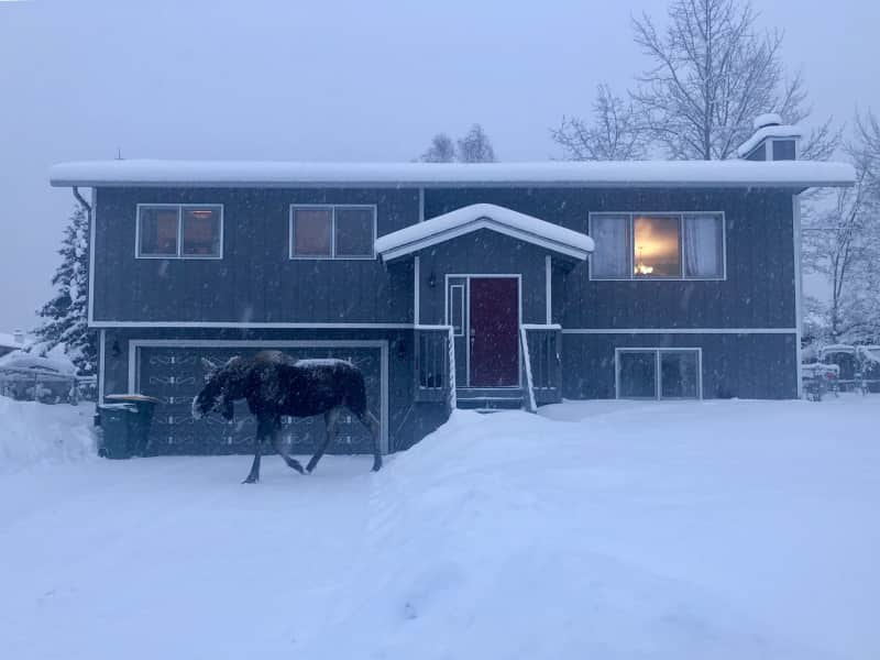 Housesitting assignment in Anchorage, Alaska, United States