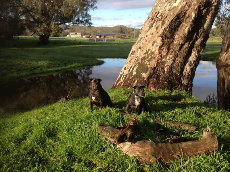 Housesitting assignment in Milawa, Victoria, Australia
