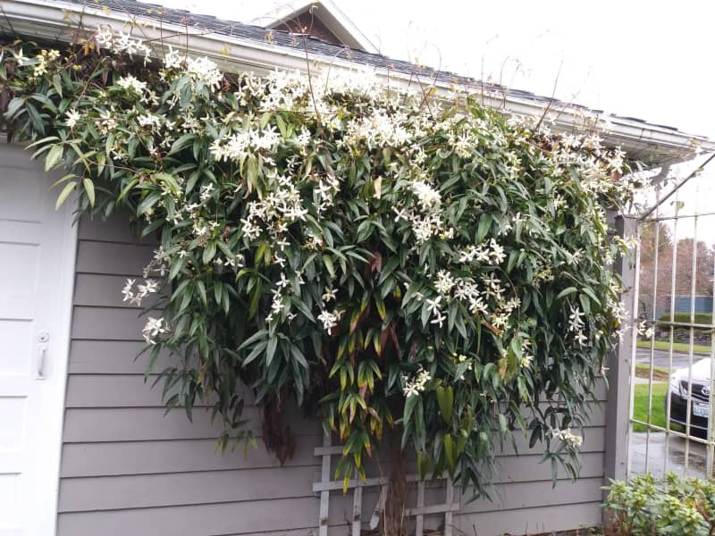 Housesitting assignment in South Seattle, Washington, United States