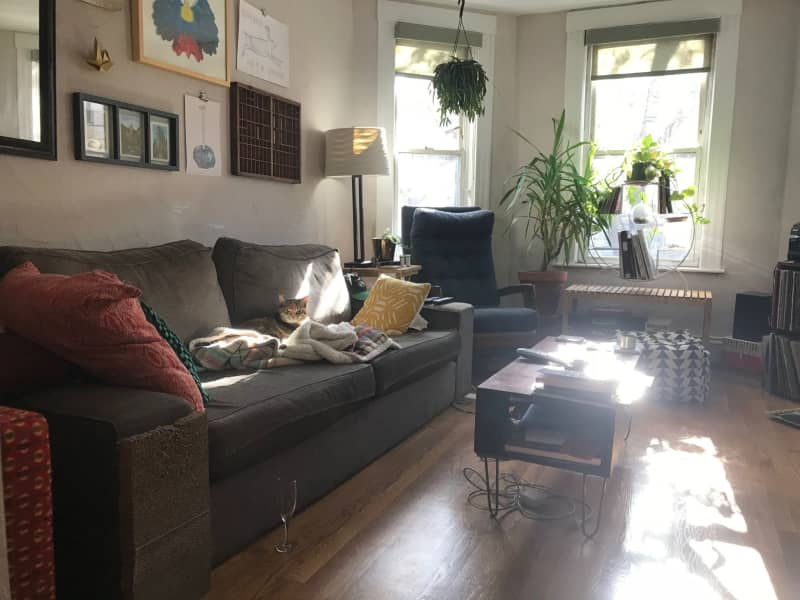 Housesitting assignment in Somerville, Massachusetts, United States