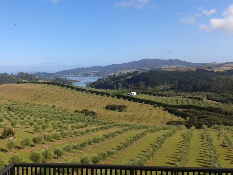 Housesitting assignment in Mangonui, New Zealand