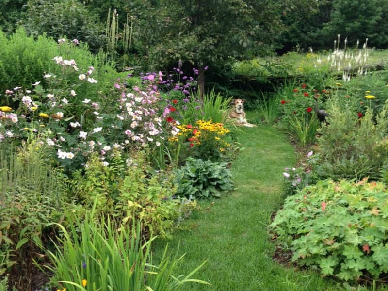 Housesitting assignment in Wakefield, Quebec, Canada