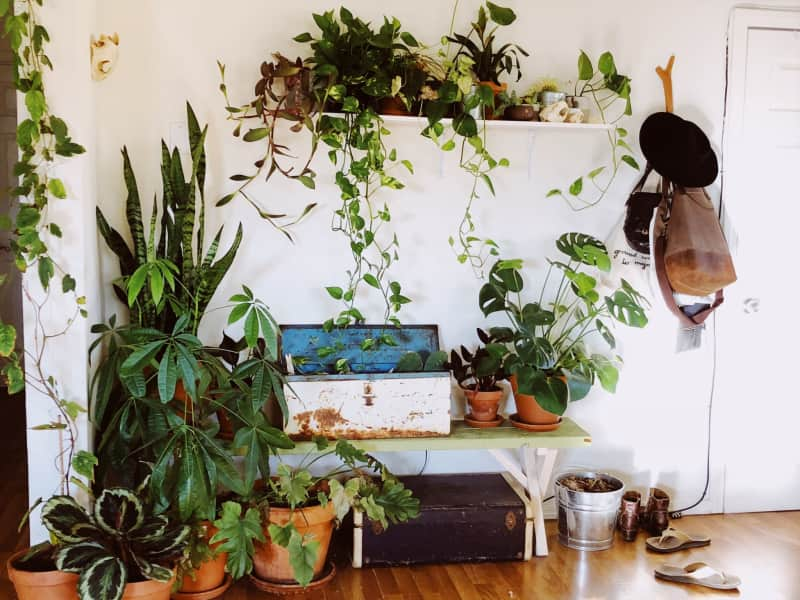 Housesitting assignment in Joshua Tree, California, United States
