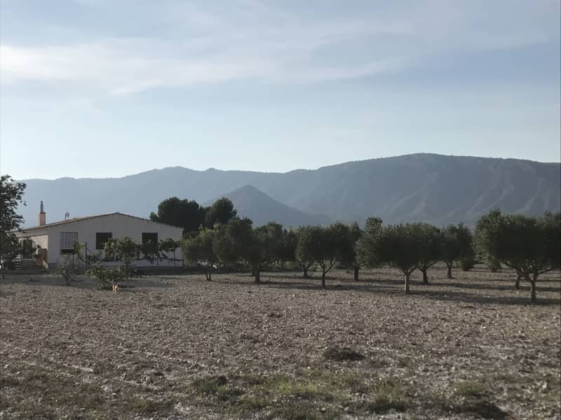 Housesitting assignment in Sax, Spain