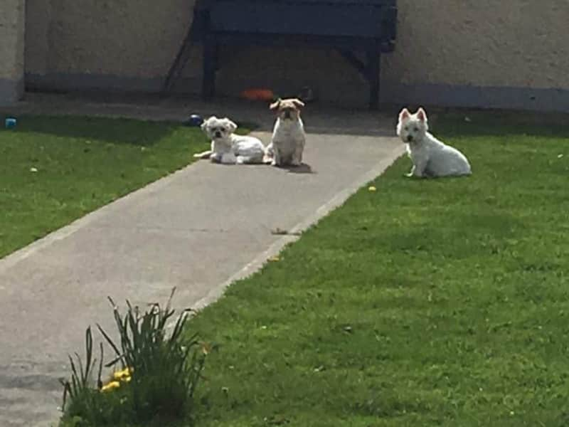 Housesitting assignment in Athboy, Ireland