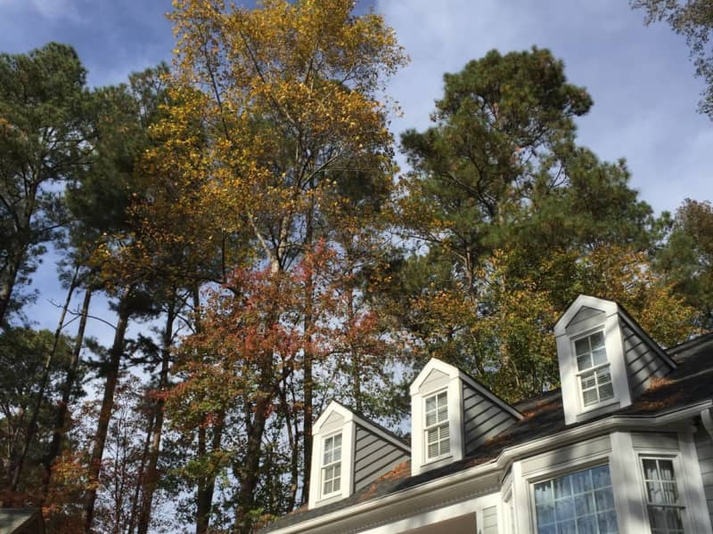 Housesitting assignment in Raleigh, North Carolina, United States