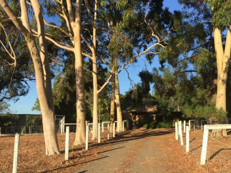 Housesitting assignment in Bedfordale, Western Australia, Australia