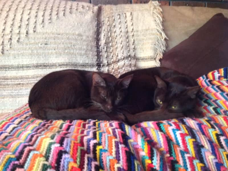 Housesitting assignment in Mount Evelyn, Victoria, Australia